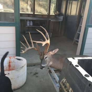 Welcome to Mississippi Sportsman Classified Ads Archive