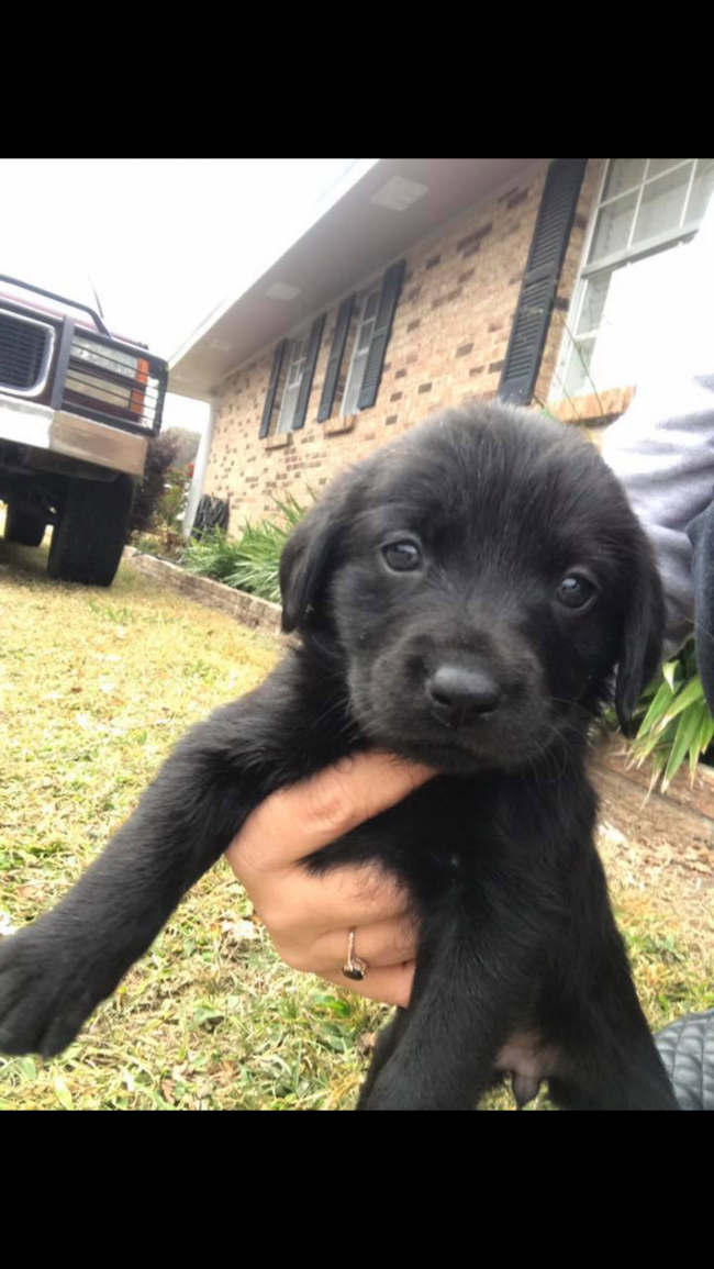Puppies For Sale In Sacramento Ca Craigslist - Best Car News 2019