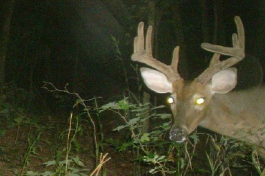 New Pics from The Swamp Ghost Cam! • Deer Hunting in South