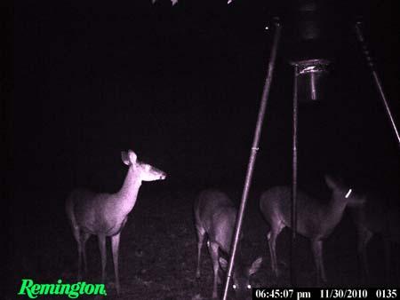 CVA SCOUT SINGLE SHOT 35 WHELEN • Deer Hunting in Southeast