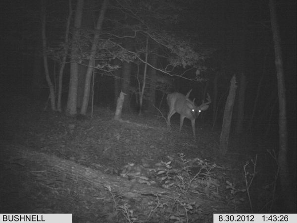 Ghost • Trail Cam Photos in Central North Carolina
