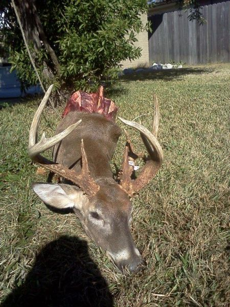 Washington Parish Buck Down Deer Hunting In Southeast Louisiana Louisiana Sportsman Reports La Our extensive list of the best hunting forums in washington, texas, ohio & loads more. washington parish buck down deer