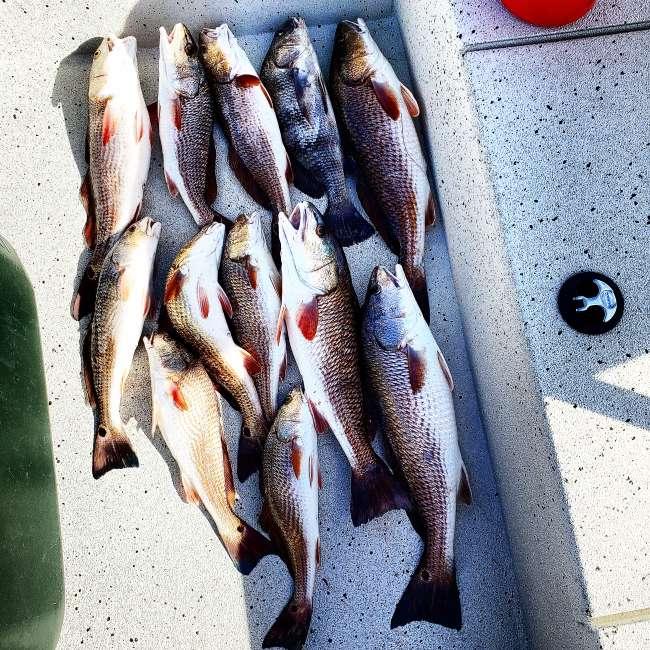 Low Water In Catfish Lake Inshore Fishing In Leeville